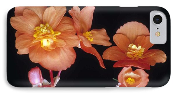 Begonia Buddies Phone Case by Laurie Paci