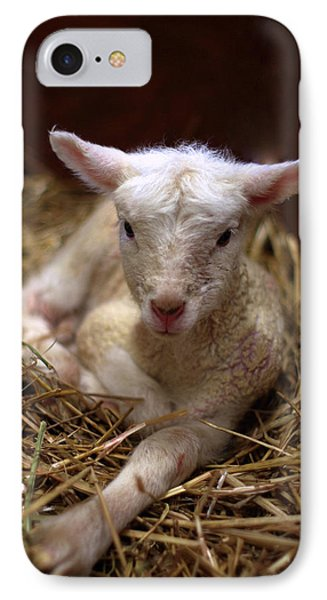 Behold The Lamb Phone Case by Linda Mishler