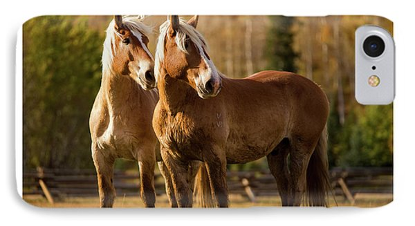 IPhone Case featuring the photograph Belgian Draft Horses by Sharon Jones