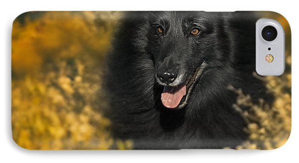Belgian Sheepdog Portrait 5 IPhone Case by Wolf Shadow  Photography