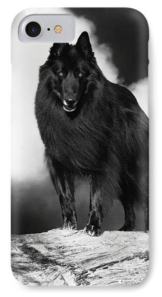 Belgian Shepherd Groenendael  3 IPhone Case by Wolf Shadow  Photography
