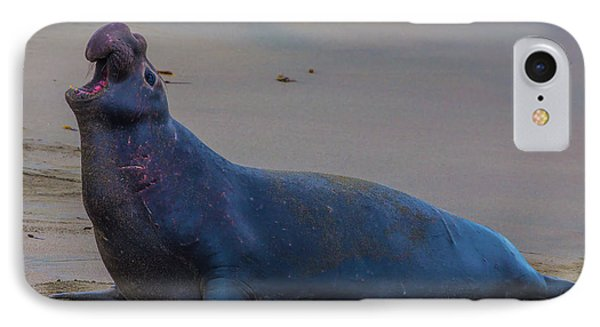 Bellowing Bull Elephant Seal IPhone Case