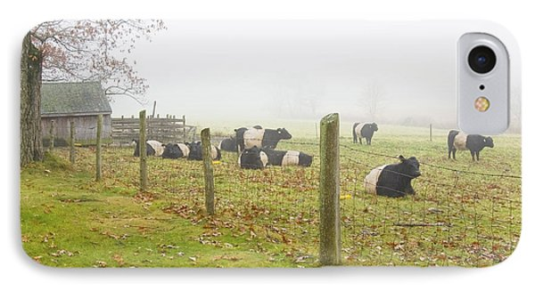 Belted Galloway Cows Farm Rockport Maine Photograph IPhone Case by Keith Webber Jr