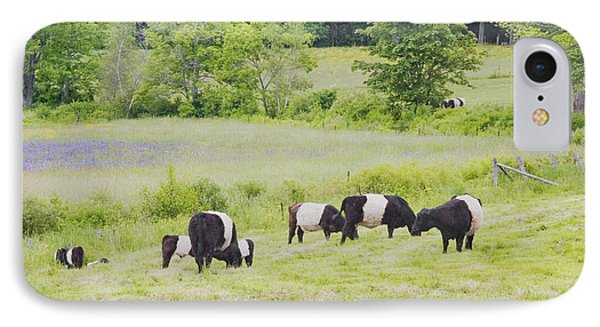 Belted Galloway Cows Rockport Maine Poster Prints IPhone Case by Keith Webber Jr