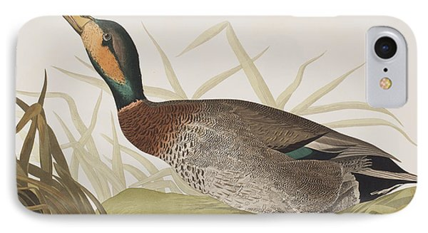 Bemaculated Duck IPhone Case