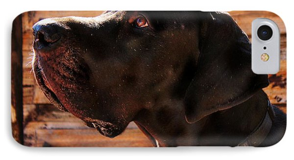 Benson IPhone Case by Clare Bevan
