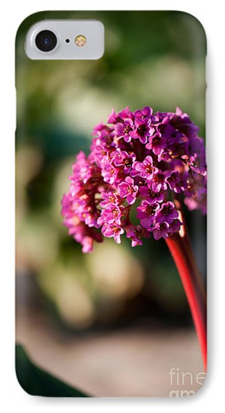 Bergenia Flowering Plant In Spring IPhone Case by Arletta Cwalina