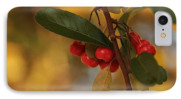 Berried Treasure  IPhone Case by Connie Handscomb