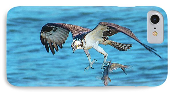 Best Osprey With Fish In One Talon IPhone Case by Jeff at JSJ Photography