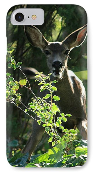 Beverly Hills Deer IPhone Case by Marna Edwards Flavell