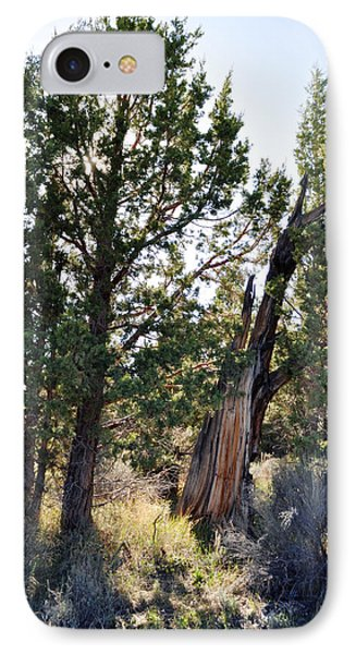IPhone Case featuring the photograph Big Bear Forest by Kyle Hanson