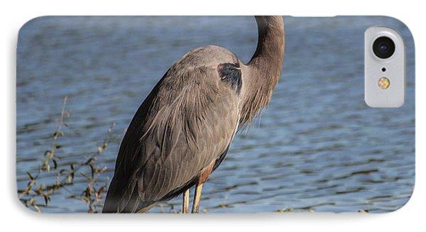 Big Bird IPhone Case