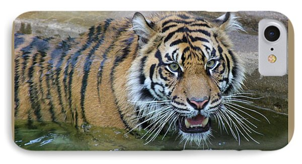 IPhone Case featuring the photograph Big Cat by Elizabeth Budd