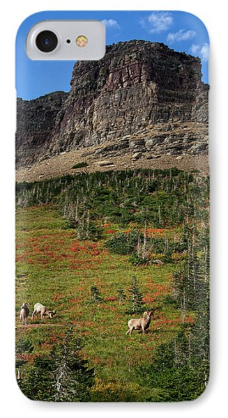 Big Horn Sheep IPhone Case by Lawrence Boothby