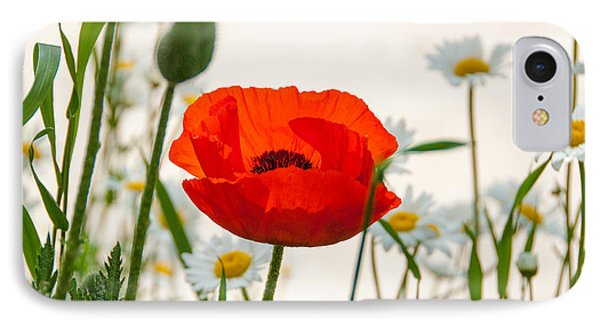 Big Red Poppy IPhone Case