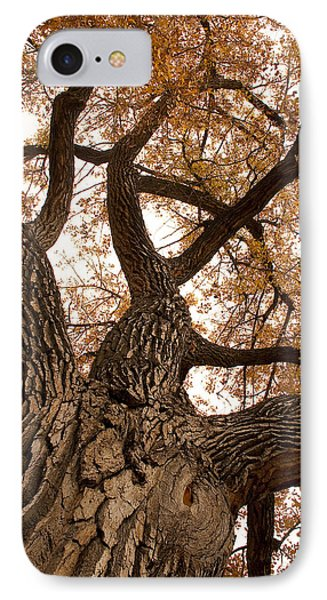 Big Tree Phone Case by James BO  Insogna