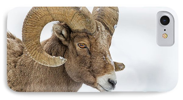 Bighorn IPhone Case by Doug Oglesby