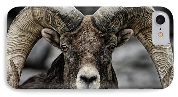 Bighorn Ram IPhone Case by Brad Allen Fine Art