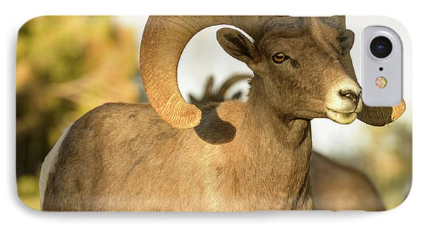 Bighorn Ram IPhone Case by Scott Warner