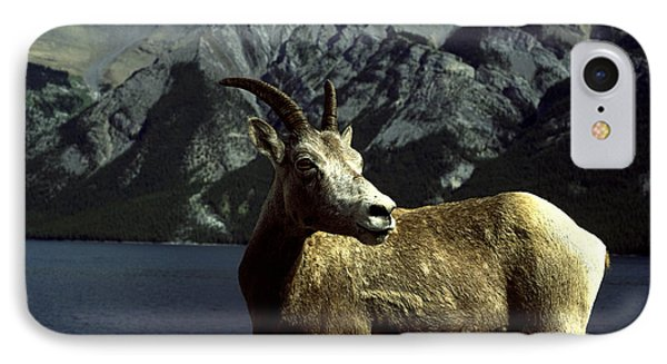 IPhone Case featuring the photograph Bighorn Sheep by Sally Weigand