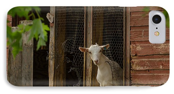 IPhone Case featuring the photograph Billy Goat by Dan Traun