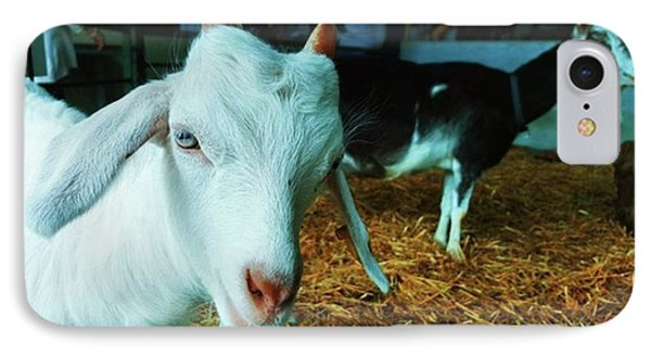 #billygoat #farm #sussex #animals Phone Case by Natalie Anne