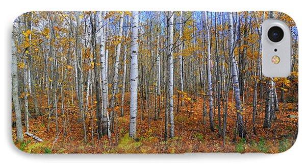 Birch Forest Autumn  IPhone Case by Catherine Reusch Daley