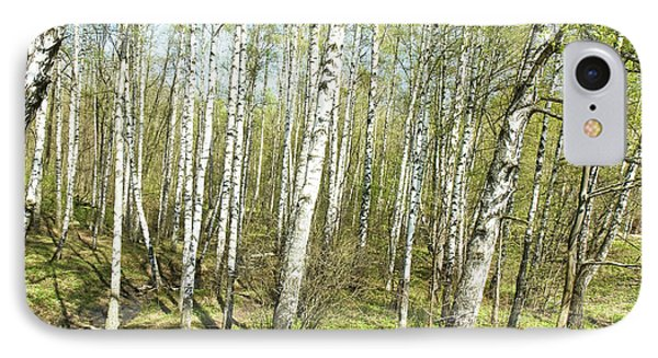 Birch Forest In Spring IPhone Case