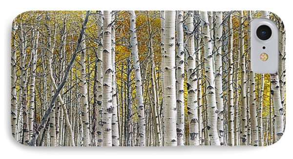 Birch Tree Grove With A Touch Of Yellow Color IPhone Case by Randall Nyhof
