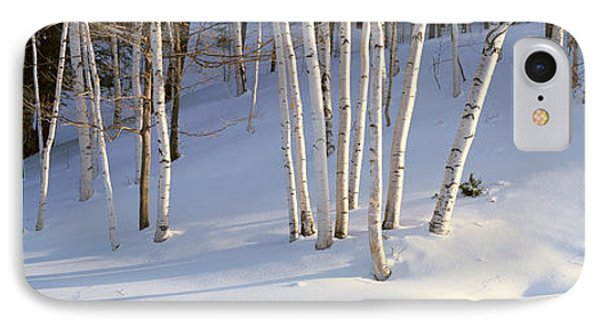 Birch Trees In The Snow, South IPhone Case by Panoramic Images