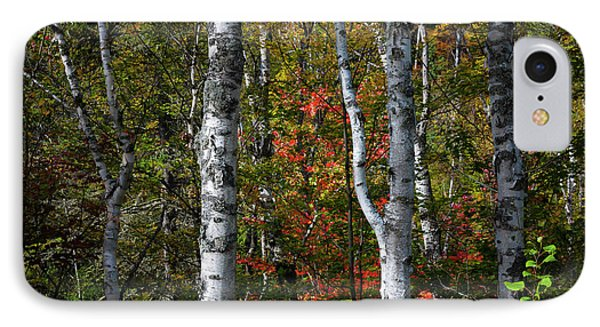 IPhone Case featuring the photograph Birches by Elena Elisseeva