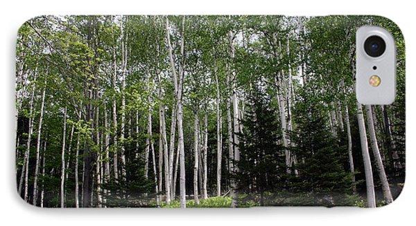 Birches IPhone Case by Heather Applegate