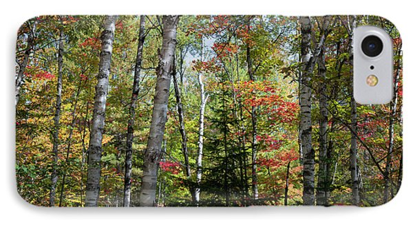 IPhone Case featuring the photograph Birches In Fall Forest by Elena Elisseeva