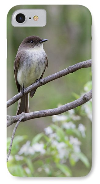 Bird - Eastern Phoebe IPhone Case by Ron Grafe