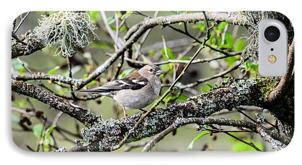 Bird In A Tree Posing IPhone Case