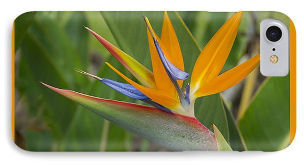 IPhone Case featuring the photograph Bird Of Paradise by Christina Lihani