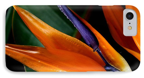 Bird Of Paradise IPhone Case by Diane Merkle