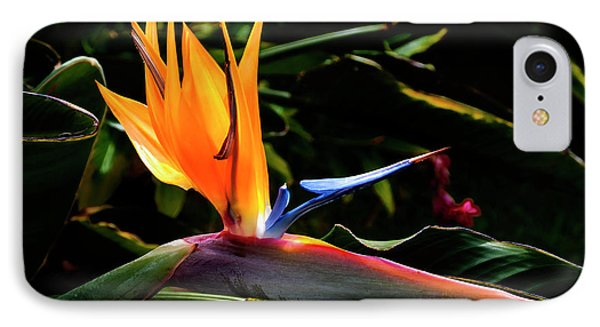 Bird Of Paradise Flower Phone Case by Brian Harig