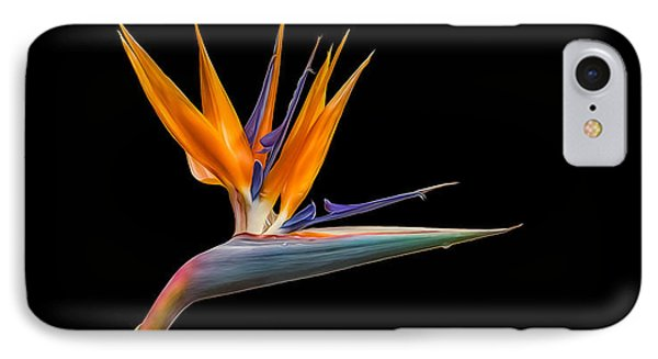 IPhone Case featuring the photograph Bird Of Paradise Flower On Black by Rikk Flohr