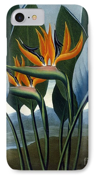 Bird Of Paradise Flower  The Queen IPhone Case by Peter Charles Henderson