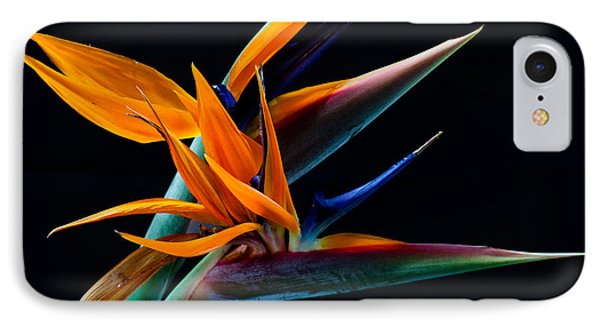 Bird Of Paradise IPhone Case by James Roemmling