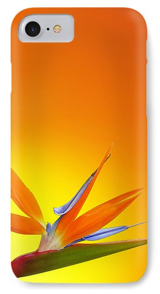 Bird Of Paradise Orange IPhone Case by Mark Rogan