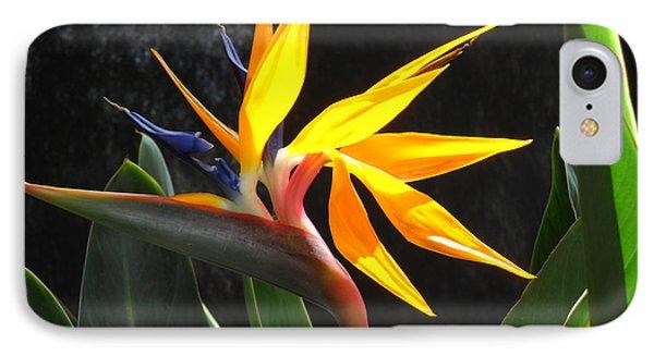 Bird Of Paradise IPhone Case by Yolanda Koh