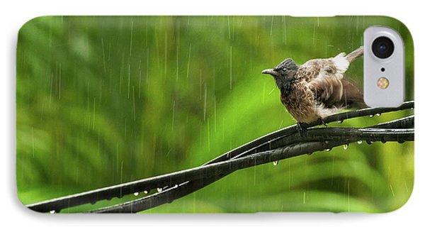 Birds Of Sri Lanka  Pycnonotus Cafer Phone Case by Venura Herath
