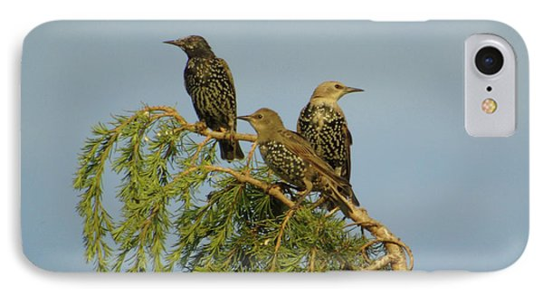 Birds-on-watch Phone Case by Gordon Auld
