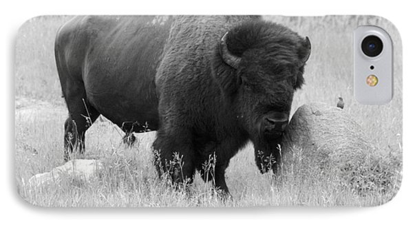 Bison And Buffalo IPhone Case by Mary Mikawoz