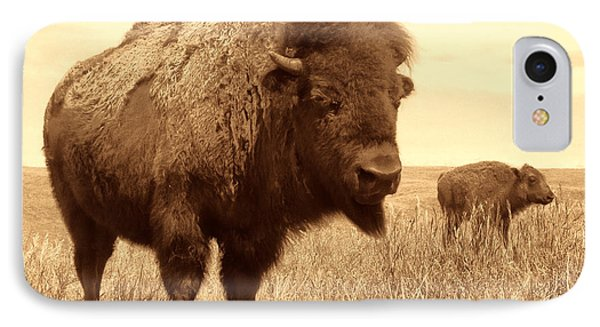 Bison And Calf IPhone Case by American West Legend By Olivier Le Queinec