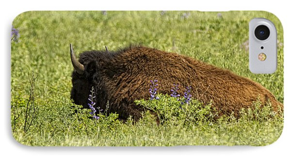 Bison In Bluebonnests IPhone Case