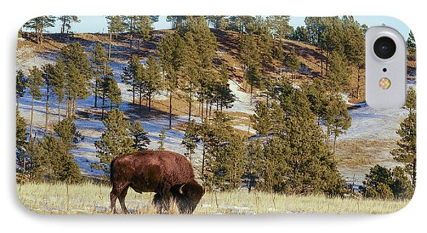 Bison In Custer State Park IPhone Case