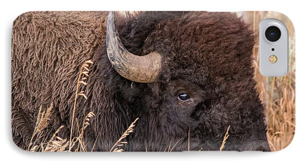 IPhone Case featuring the photograph Bison In The Grass by Mary Hone